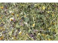 Травы лечебные, растения лекарственные