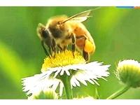 Продукты пчел