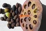 Лотос каспийский, семена
